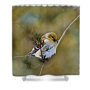 American Goldfinch On A Cedar Twig - Digital Paint Shower Curtain