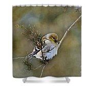 American Goldfinch On A Cedar Twig Shower Curtain
