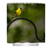American Goldfinch Perched On A Shepherds Hook Shower Curtain