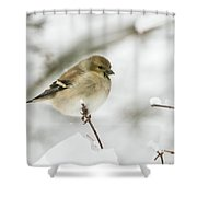 American Goldfinch Up Close  Shower Curtain