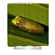 American Green Tree Frog I Mlo Shower Curtain
