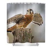 American Kestral Shower Curtain