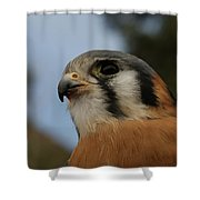 American Kestrel 2 Shower Curtain