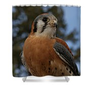 American Kestrel 4 Shower Curtain