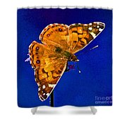 American Lady Butterfly Blue Square Shower Curtain