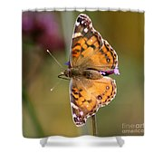 American Lady Butterfly Shower Curtain