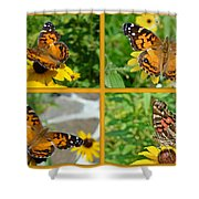 American Lady Butterfly - Vanessa Virginiensis Shower Curtain