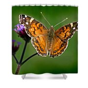 American Lady Butterfly With Green Background Shower Curtain