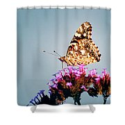 American Painted Lady Butterfly Blue Background Shower Curtain