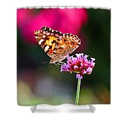 American Painted Lady Butterfly Pink Shower Curtain
