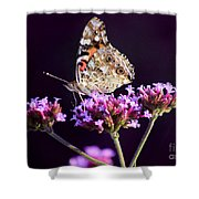 American Painted Lady Butterfly Purple Background Shower Curtain