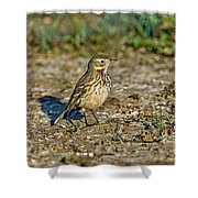 American Pipit Shower Curtain