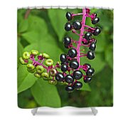 American Pokeweed  Shower Curtain