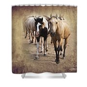 American Quarter Horse Herd Shower Curtain