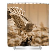 American Red Tail Hawk Shower Curtain