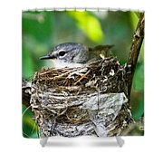 American Redstart Nest Shower Curtain