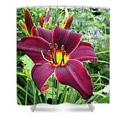 American Revolution Daylily Shower Curtain