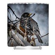 American Robin 2 Shower Curtain