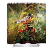 American Robin - Harbinger Of Spring Shower Curtain