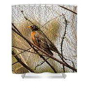 American Robin On A Branch Shower Curtain