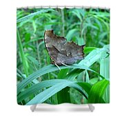 American Snout Butterfly Shower Curtain