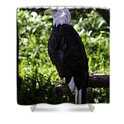 American Symbol Two Shower Curtain