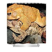 American Toads  Shower Curtain