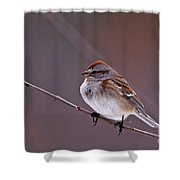 American Tree Sparrow In A Winter Setting Shower Curtain