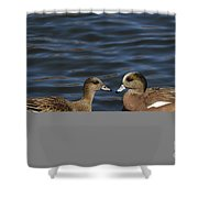 American Widgeon Pair Shower Curtain