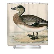 American Wigeon Shower Curtain