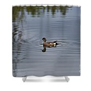 American Wigeon Shower Curtain