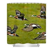 American Wigeon Drakes Shower Curtain