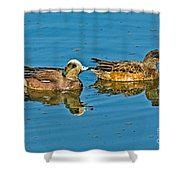 American Wigeon Pair Swimming Shower Curtain