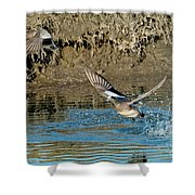 American Wigeon Pair Taking Shower Curtain
