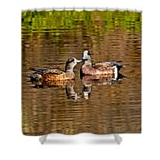 American Wigeon Pair Together Shower Curtain