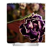 Amethyst African Violet Shower Curtain