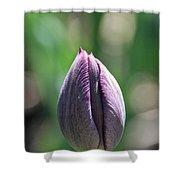 Amethyst Blossom Shower Curtain