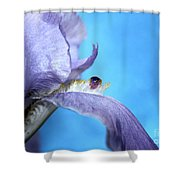 Amethyst Iris Shower Curtain