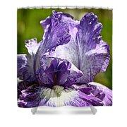Amethyst Iris Shower Curtain