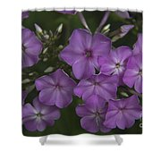 Amethyst Phlox Shower Curtain