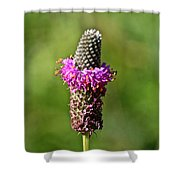 Amethyst Ring Shower Curtain