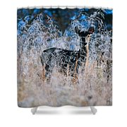 Amid The Frosty Wheat Shower Curtain