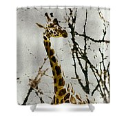 Amid The Trees Shower Curtain