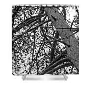 Amidst The Pines Is The Barrens Shower Curtain