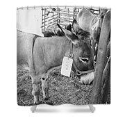Amish Donkey At Action Shower Curtain
