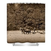 Amish Farmer Tilling The Fields In Black And White Shower Curtain
