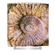 Ammonite Fossil Shower Curtain