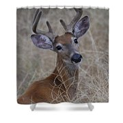 Among The Brush Shower Curtain