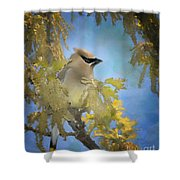 Among The Catkins Shower Curtain