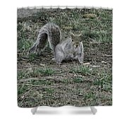 Gray Squirrel Among The Pine Cones Shower Curtain
